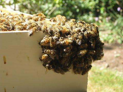 Beenomics Project, Honey Production Stats, UMASS Study
