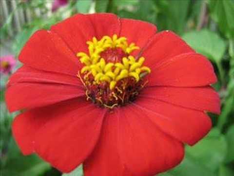 Flores de Guatemala
