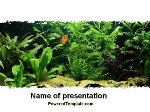 Aquarium Fish Species PowerPoint Template By PoweredTemplate.com