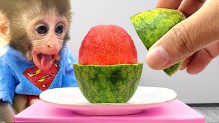 Baby monkey Bon Bon eats mini watermelon and playing with puppy and ducklings in the garden