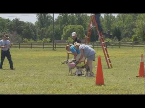 Reidsville NC Lure Coursing
