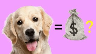WHAT'S THE VALUE OF A DOG? | Halo 3 Live Commentary