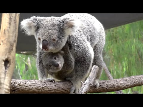 Paradise Country Gold Coast Australia