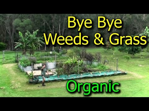 Preventing & Getting Rid of Weeds/Grasses in Vegetable Garden Beds