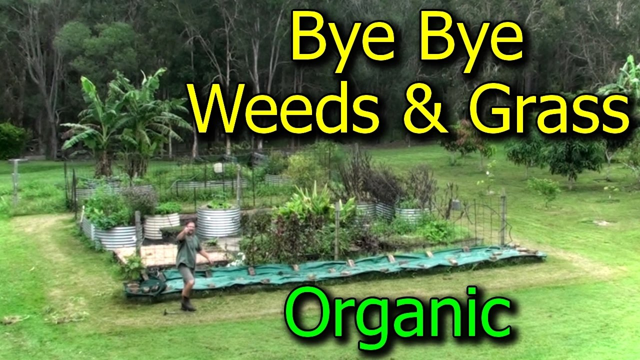Preventing Getting Rid of WeedsGrasses in Vegetable Garden Beds
