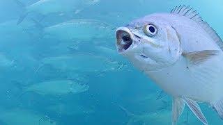 LIVE Deerfield Beach - Underwater Camera