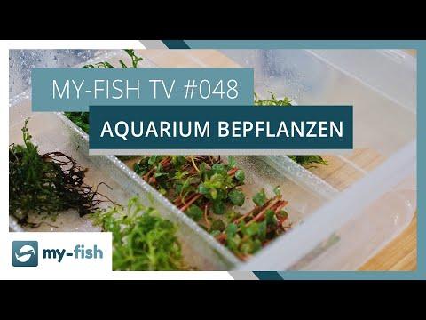 Ein Aquarium richtig bepflanzen | my-fish TV