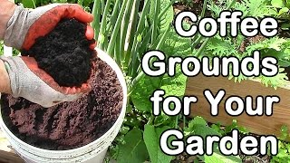 How Much Coffee Do We Use In the Garden? Coffee Grounds for Garden