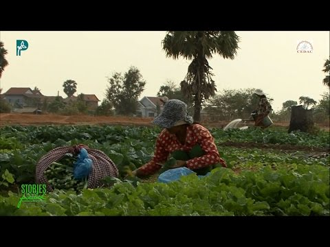 AGROECOLOGY IN ACTION: The  Women of Kampong Speu, Cambodia