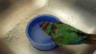 Monty taking a bath