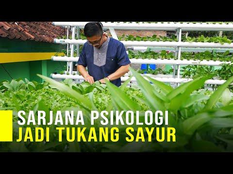 Kisah Inspirasi  Dari Sarjana Psikologi Jadi Tukang Sayur Hidroponik