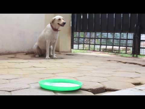 CHARLIE - Tamil Short Film | Blooper Teaser | Pragash Raj