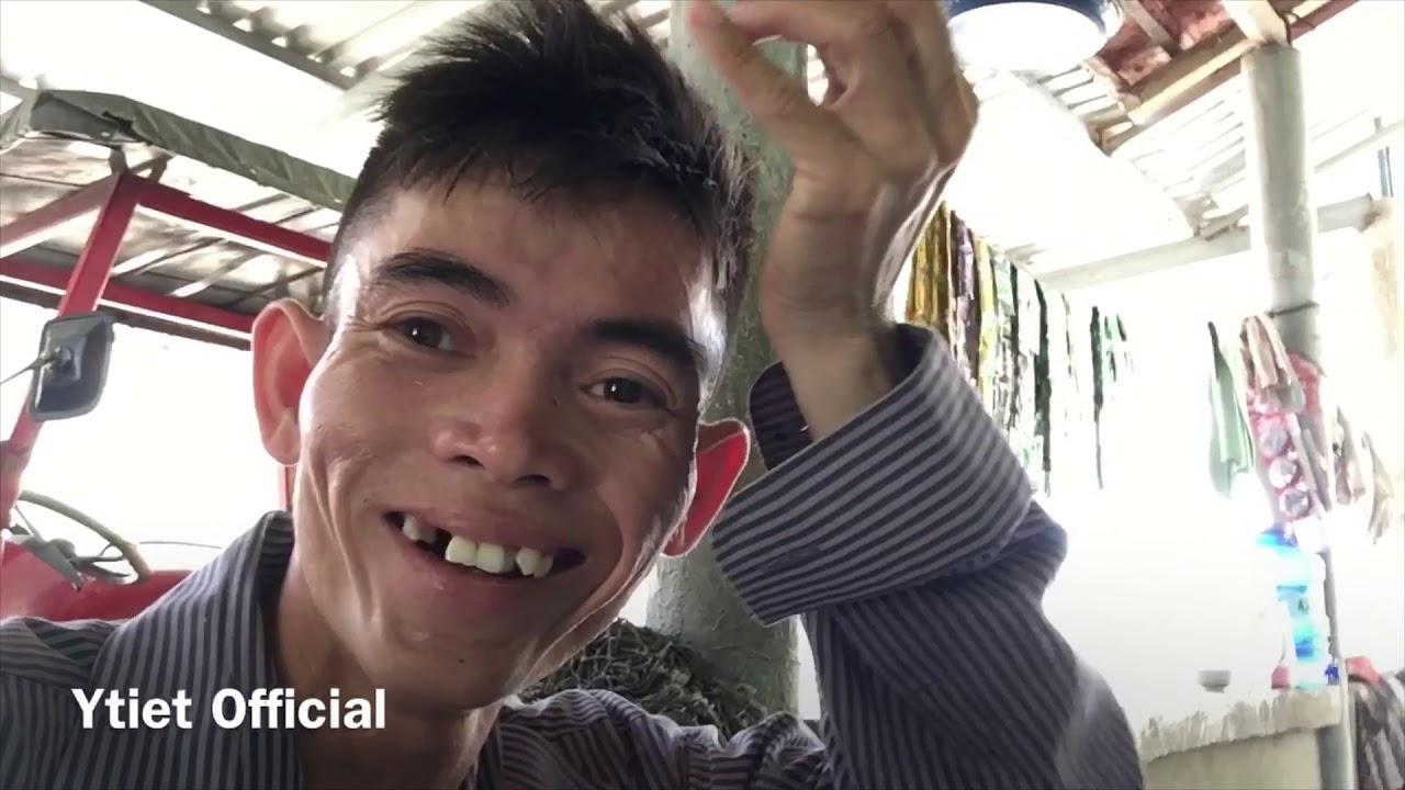Hôm Nay Ơr Nhà Gom Ra Lúa Cho Bò Ăn | Ytiet Official