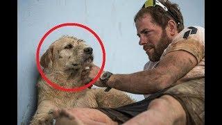 Они НАКОРМИЛИ Бездомную Собаку и Не Подозревали, к Чему Это Приведёт...
