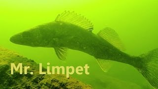 SCUBA Diving: Potomac River Freshwater Fish