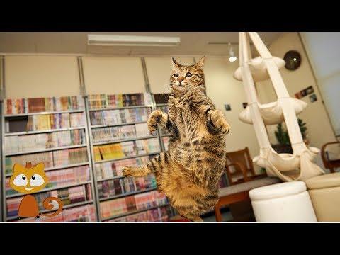 Cats Jumping Fail - Hilarious Compilation