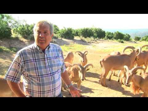 Panhandle Spirit: Wildlife of Palo Duro Canyon