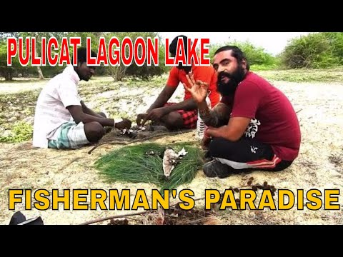 Pulicat lagoon lake is fisherman paradise(pazhaverkadu in tamil)malayalam travel video(புலிகட் )
