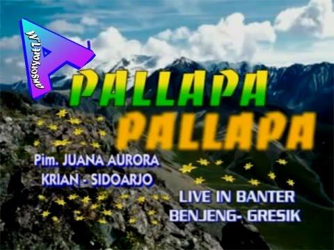 Full album dangdut koplo new  palapa group lawas 2003 jaman dulu