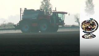 Glyphosate: Monsanto's Latest Scandal