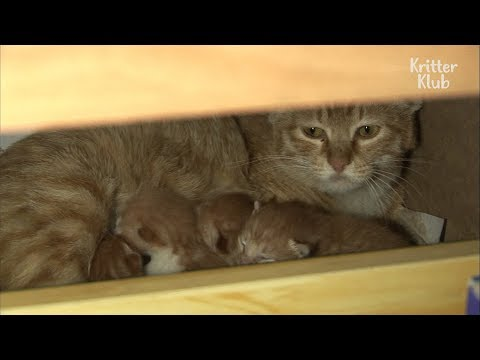 Cats Invaded An Office | Kritter Klub