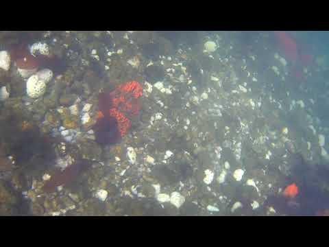 Jaroslow Reef NOV 2017