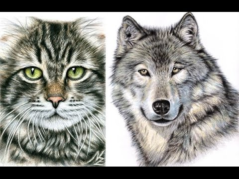 tiere zeichnen mit nicole zeug drawing animals youtube. Black Bedroom Furniture Sets. Home Design Ideas