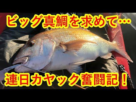 ビッグ真鯛を求めて…連日カヤック奮闘記!