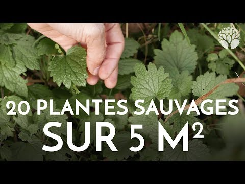 20 plantes sauvages sur 5 m2