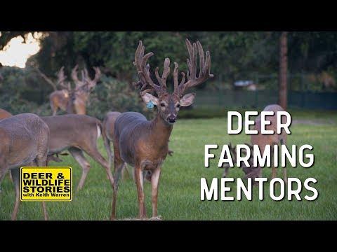 Deer Farming Mentors   Deer & Wildlife Stories