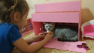 КОТЫ И ДЕТИ 😻 КОТ И РЕБЕНОК ИГРАЮТ ВМЕСТЕ Приколы с котами Скоттиш страйт 🐱 Scottish straight Cat