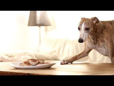 Silas the Whippet and the Quest for the Meatballs (Shortfilm)