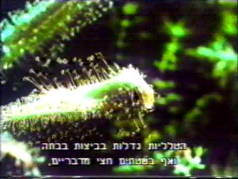 מלכודת דבק צמחים טורפים - טללית Drosera