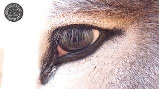Noche? los caballos ocurren de charley ¿Por qué