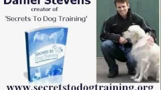 Dog Training Secrets From Daniel Stevens