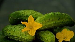Огурцы. Как собрать семена огурцов? How to collect the seeds of cucumbers?(Чтобы иметь гарантированный урожай огурцов, семена мы собираем сами. Как это сделать можно посмотреть в..., 2014-09-03T12:41:37.000Z)