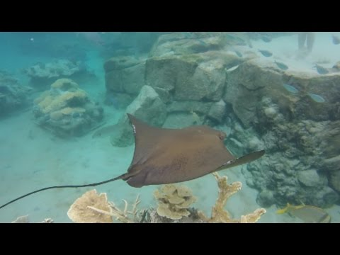 MY TRIP TO AMERICA (DISCOVERY COVE)