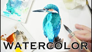 Watercolor Bird - Painting a Kingfisher in Watercolour 透明水彩畫翠鳥