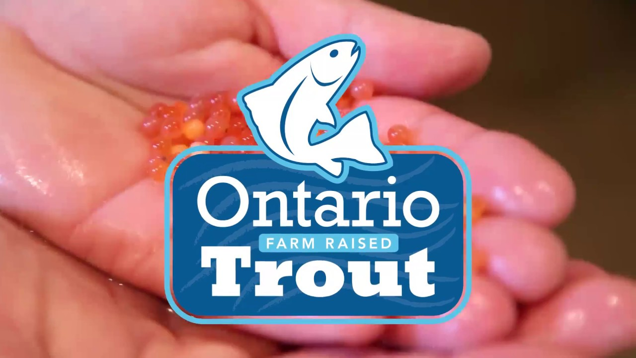 A look at Ontario's rainbow trout industry