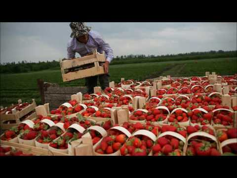 Russia Strengthens Position On Global Food Market As GMOs Consume America