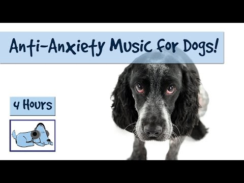 4 Hour Anxiety Playlist for Dogs! Cure Separation Anxiety and Soothe your Dog with Music