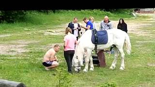 Тёлки, у коня, селфи с х...