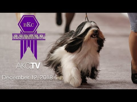 Brevard Kennel Club All-Breed Show