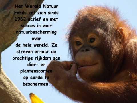 bedreigde dieren