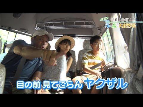 (3)すくすくぽん!SP 世界遺産・屋久島 海と森の大自然旅 出演:加藤清史郎・智恵里・憲史郎