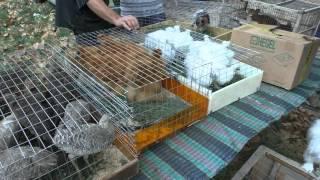 Выставка голубей Крым Джанкой 05.09.2015г(, 2015-09-08T06:48:50.000Z)