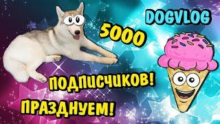 5000 ПОДПИСЧИКОВ! НА КАНАЛЕ ХАСКИ СИНДИ! Говорящая собака