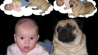 Playful Pug And Baby! Jokes Compilation # 8 / Игривый Мопс и Ребенок!Подборка Приколов #8