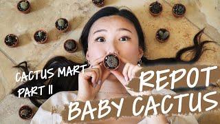 BABY CACTUS REPOTTING | PLANT HAUL | CACTUS MART PART II