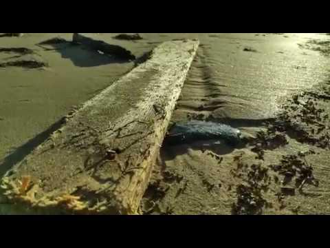 Chapapote en la playa de Area, en Viveiro